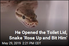 He Opened the Toilet Lid, Snake 'Rose Up and Bit Him'
