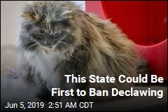 NY Set to Become First State to Ban Declawing