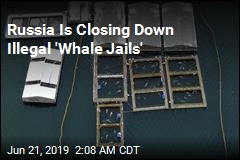 Russia Says 100 Illegally Captured Whales Will Be Freed