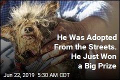 Don't Look Away From the World's Ugliest Dog