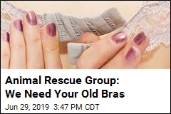 Animal Group: Your Old Bras Can Save Turtles