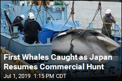 Commercial Whaling Resumes in Japan After 31 Years
