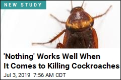 They Spent Months Trying to Kill Cockroaches, Mostly Failed