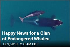 Happy News for Endangered Whales: a Baby Girl
