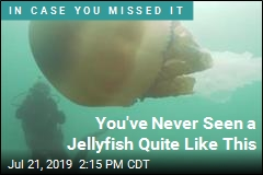 You've Never Seen a Jellyfish Quite Like This