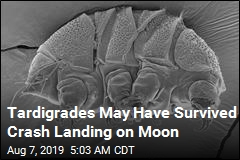 Tardigrades May Have Survived Crash Landing on Moon