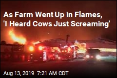 As Farm Went Up in Flames, 'I Heard Cows Just Screaming'