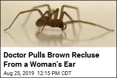 Doctor Pulls Brown Recluse From a Woman's Ear