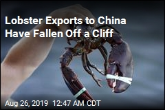 Tariffs Pinch US Lobster Exports