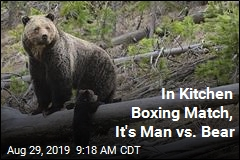 In Kitchen Boxing Match, It's Man vs. Bear