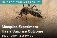 Mosquito Experiment Has a Surprise Outcome
