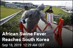 African Swine Fever Reaches South Korea