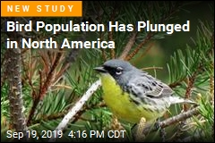 Bird Population Has Plunged in North America
