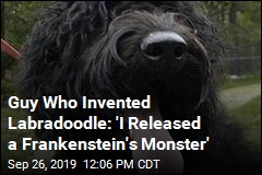 Guy Who Invented Labradoodle Regrets It