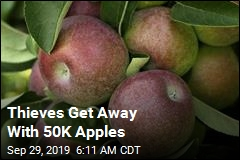 Thieves Swipe 50K Apples