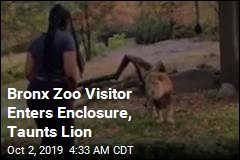 Visitor Climbs Inside Zoo Exhibit, Taunts Lion