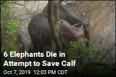 Elephant Calf Falls Over a Waterfall, Rescue Turns Tragic
