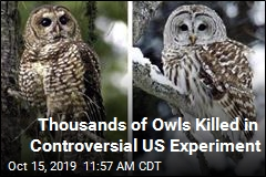 Thousands of Owls Killed in Controversial US Experiment