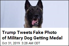 Trump Tweets Fake Photo of Military Dog Getting Medal