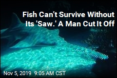 He Took the Fish's 'Saw' Off, Now Faces Jail Time