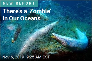 A Major Scourge in Our Oceans: 'Ghost Gear'