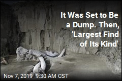 It Was Set to Be a Dump. Then, 'Largest Find of Its Kind'