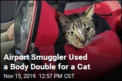 Airport Smuggler Used a Body Double for a Cat