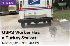 USPS Worker Has a Turkey Stalker
