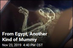 Egypt Unveils Another Kind of Mummy