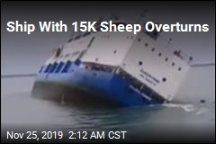 Ship With 15K Sheep Overturns
