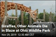Exotic Animals Die in Ohio Barn Fire
