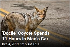 He Thought He Had Saved a Dog. It Was a Coyote