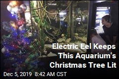 Aquarium's Christmas Tree Gets Its Juice From Surprise Provider