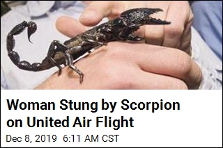 Woman Stung by Scorpion on United Air Flight