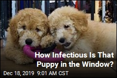 Infections in 13 States Tied to Pet Store Puppies