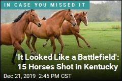 'It Looked Like a Battlefield': 15 Horses Shot in Kentucky