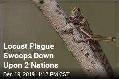 Locust Plague Swoops Down Upon 2 Nations
