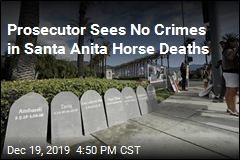 Prosecutor Sees No Crimes in Santa Anita Horse Deaths