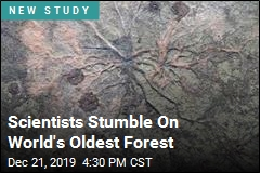 Scientists Stumble On World's Oldest Forest