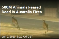 500M Animals Feared Dead in Australia Fires