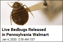 Live Bedbugs Released in Pennsylvania Walmart