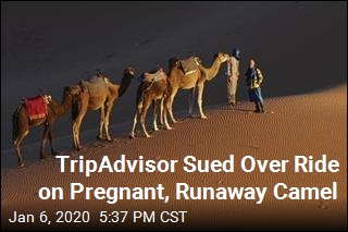 TripAdvisor Sued Over Ride on Pregnant, Runaway Camel