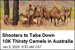 Shooters to Take Down 10K Thirsty Camels in Australia