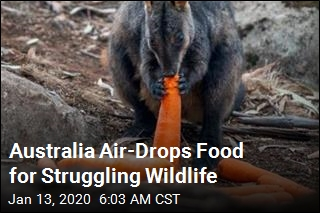 Operation Rock Wallaby Drops Food for Aussie Wildlife