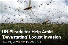 UN Pleads for Help Amid 'Devastating' Locust Invasion