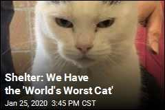 You Can Adopt the 'World's Worst Cat'