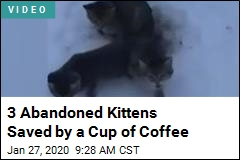 3 Abandoned Kittens Saved by a Cup of Coffee