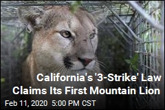 California's '3-Strike' Law Claims Its First Mountain Lion