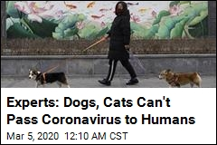Experts: Dogs, Cats Can't Pass Coronavirus to Humans