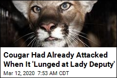 Cougar Had Already Attacked When It 'Lunged at Lady Deputy'